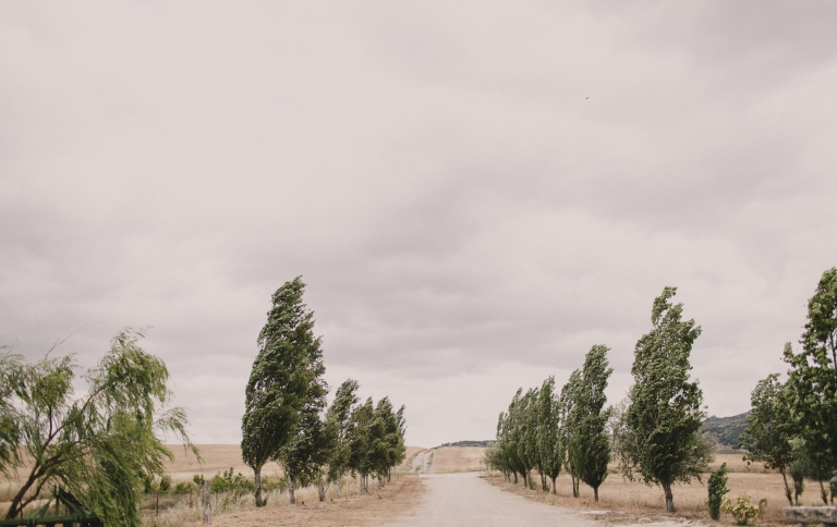 ronda fields